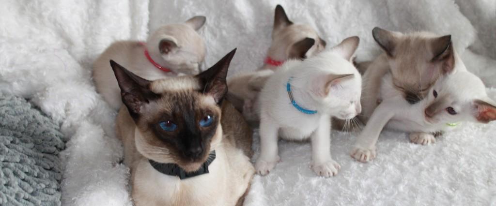 Er zijn nog enkele kittens beschikbaar