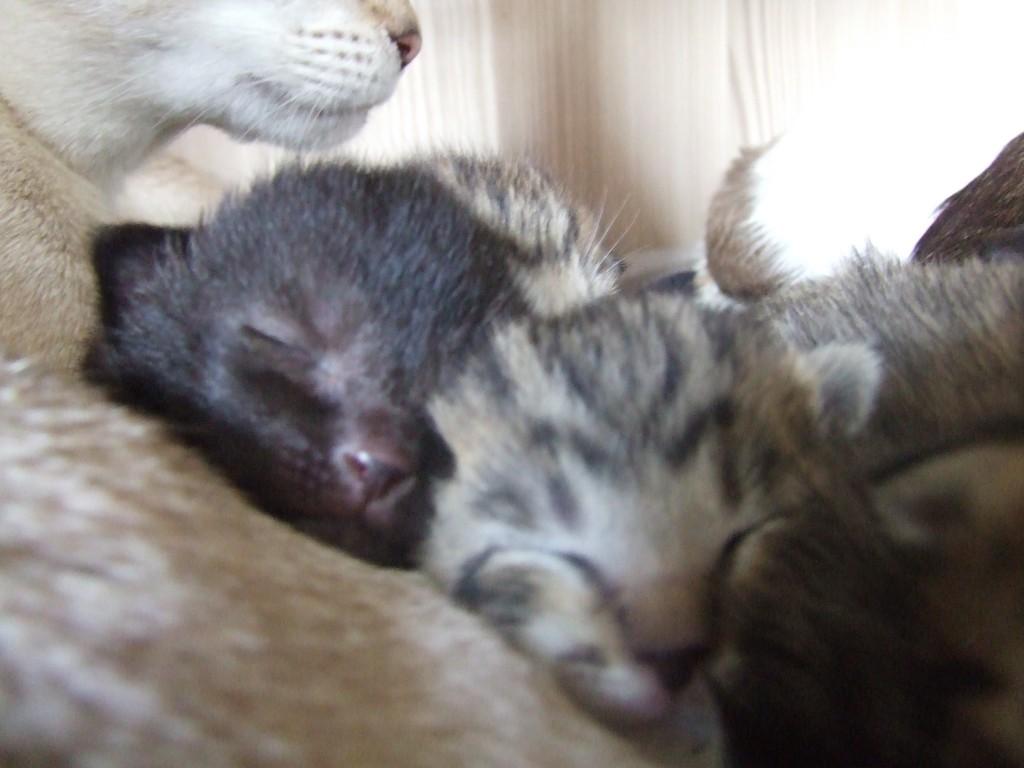 kittenfoto 008
